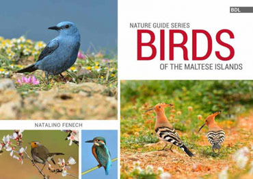 Birds-of-the-Maltese-Islands BDL Books Cover
